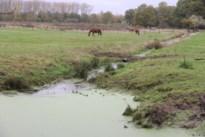 Bevers zijn te actief: zorgen over hoog waterpeil in Neeroeterse beken