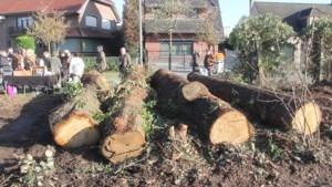 Bewoners houden koffietafel na de kap van vier eiken in Maasmechelen