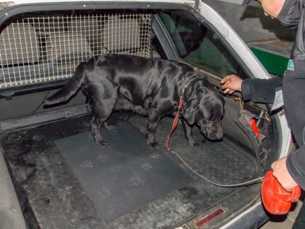 Belgische (39) in Franse cel: betrapt met 111 kilo hasj en haar drie kinderen in de auto