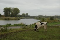 Maas in Nederlands-Limburg vervuild met landbouwgif, bron van vervuiling in België