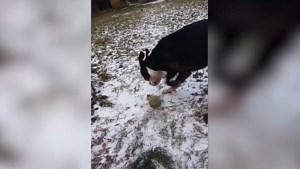 Pechvogel van de dag: speeltje van hond vriest vast aan de grond