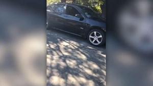 Vijf zwerfkatten richten ravage aan in geparkeerde auto