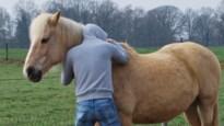Jongerenwerking Pieter Simenon combineert boksen en paardrijden