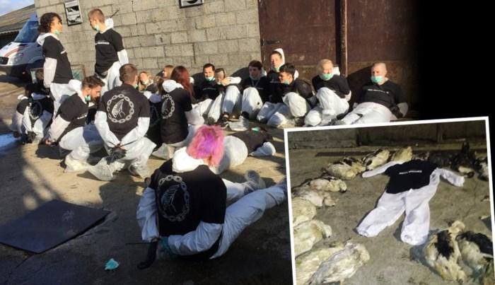 183 eenden gestorven na actie van dierenrechtenactivisten
