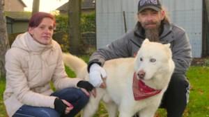 Deze hond redde zijn baasje uit een brandende flat
