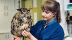 'Animalitis' bij de dierenarts van het Natuurhulpcentrum