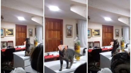 Deze kat kan beter afwassen dan jij
