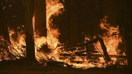 Bosbranden Australië: hulpdiensten maken zich op voor hitte en sterke wind