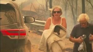 Heldendaad: vrouw riskeert eigen leven om gewonde koala uit vuurzee te redden