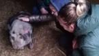 Elise Mertens is dierenverzorgster voor één dag