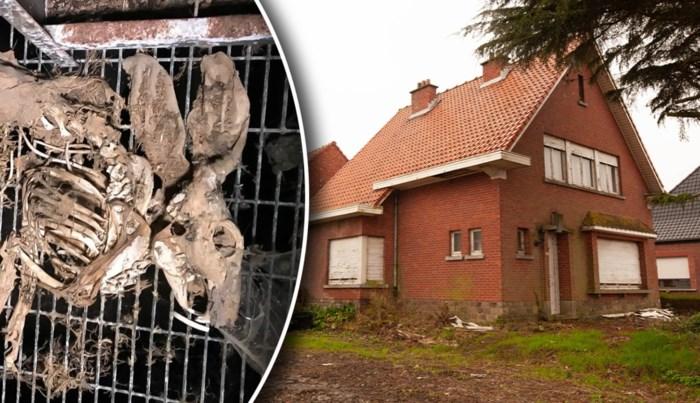 Honderdtal dode konijnen liggen al meer dan 10 jaar in kooien in 'horrorstal'