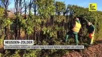 Groenarbeiders zetten per ongeluk haag in brand tijdens verdelgen onkruid