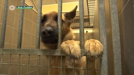 Dierenasiel Sint-Truiden zoekt pleeggezinnen voor honden en katten