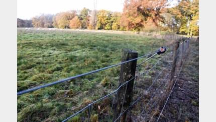 Zes kilometer draad om schapen te beschermen tegen wolf en everzwijnen
