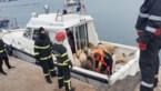 14.600 schapen belanden in zee wanneer schip kapseist