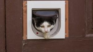 Kat buiten laten in strijd met EU-regels, volgens Nederlandse onderzoekers