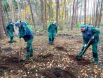 60.000 bomen voor meer variatie in Limburgse bossen