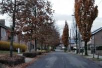 Vandaal aan het werk in Hoeselt: dode bomen omdat iemand er gaten in boort