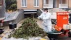 Ruim duizend cannabisplanten aangetroffen in hypermoderne plantage in Lanakense villa