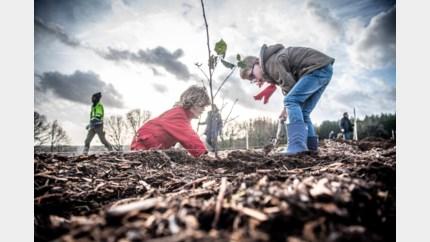 4.000 bomen vervangen fijnsparren op Venusberg