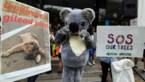 Klimaatwijziging bedreigt opnieuw 1.840 soorten met uitsterven