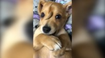Ondanks bod van 2 miljoen houdt asiel puppy met staartje op hoofd zelf