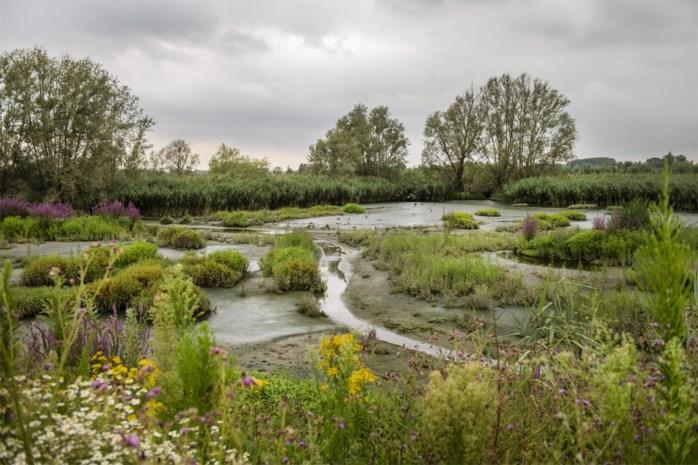 Herstel natuurgebieden helpt tegen effecten van klimaatopwarming