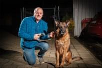 Dierenasielen krijgen te veel herdershonden binnen: Sint-Truiden start met sensibiliseringscampagne