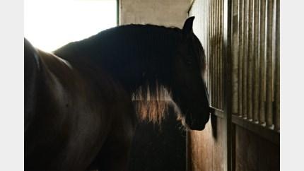 Drie verwaarloosde paarden in beslag genomen