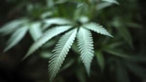 Maaseikse cannabisplantage met 431.300 euro winst: koppel krijgt 40 maanden cel