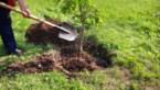 Boswachters planten komende maanden half miljoen bomen en struiken in Vlaanderen