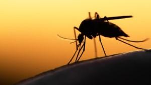 De mug, het dodelijkste dier op aarde