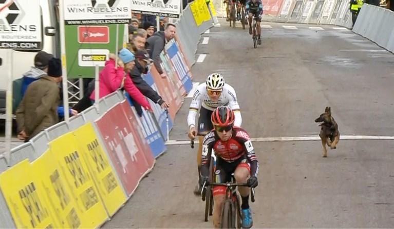 Mathieu van der Poel knoopt opnieuw aan met de zege in Druivencross Overijse, waar hond voor sensatie zorgt