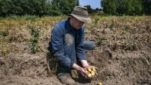 In 96 gemeenten was zomer uitzonderlijk droog