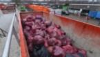 Waarom Limburgers de beste afvalsorteerders zijn