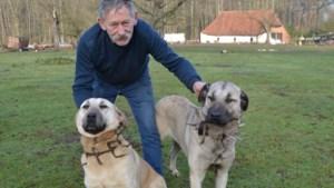 Boer 'wapent' honden met pinnen tegen de wolf