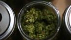 """""""Amper wetenschappelijk bewijs voor nut van cannabismedicijnen"""""""