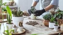 Vijf plantentrends in 2020 voor wie groene vingers heeft