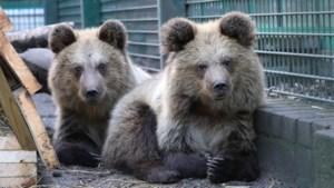 Recordjaar voor Natuurhulpcentrum: meer dan 10.000 dieren opgevangen