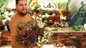 Tongerse bloemenzaak geeft 30.000 tulpen gratis weg