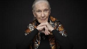 UHasselt reikt eredoctoraat uit aan wereldberoemde antropologe Jane Goodall