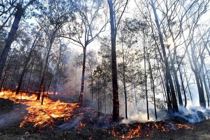 Opnieuw brandweerman omgekomen tijdens blussen van bosbranden in Australië