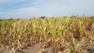 Fruitboeren krijgen voorrang bij uitkering droogteschade: