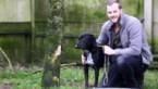 Dierenasiel van Genk zoekt vijf gezinnen die moeilijkere hond willen adopteren