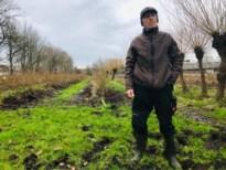 Bessenplantage Blueberry Fields volledig vernield door everzwijnen