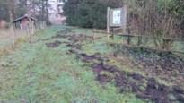 Everzwijnen beschadigen blauwbessenplantage in Koersel
