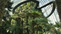Tips voor een reis naar Singapore
