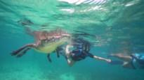 Ongelofelijke beelden: snorkelaars zwemmen op enkele centimeters van gigantische krokodillen