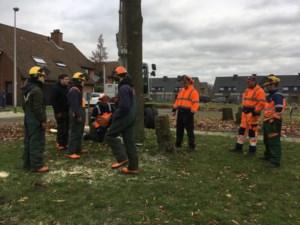 6NGTW voert zaagwerken uit in samenwerking met gemeente Bocholt