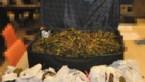 Politie neemt dertien kilo van zeldzame drug in ons land in beslag